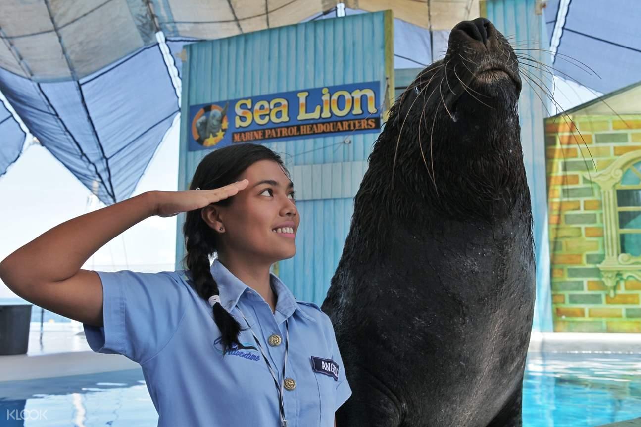 swim with sea lions ocean adventure