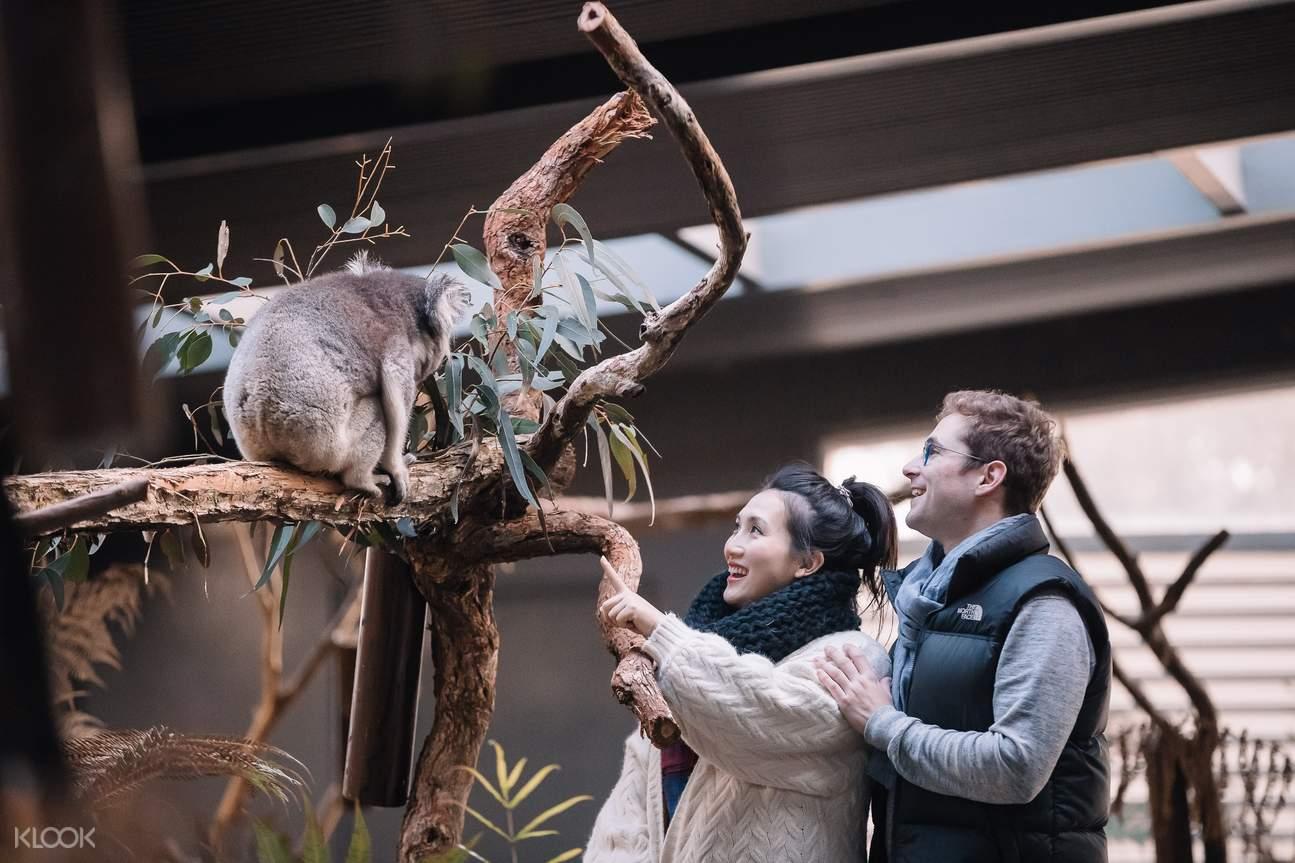 Koala Close Encounter