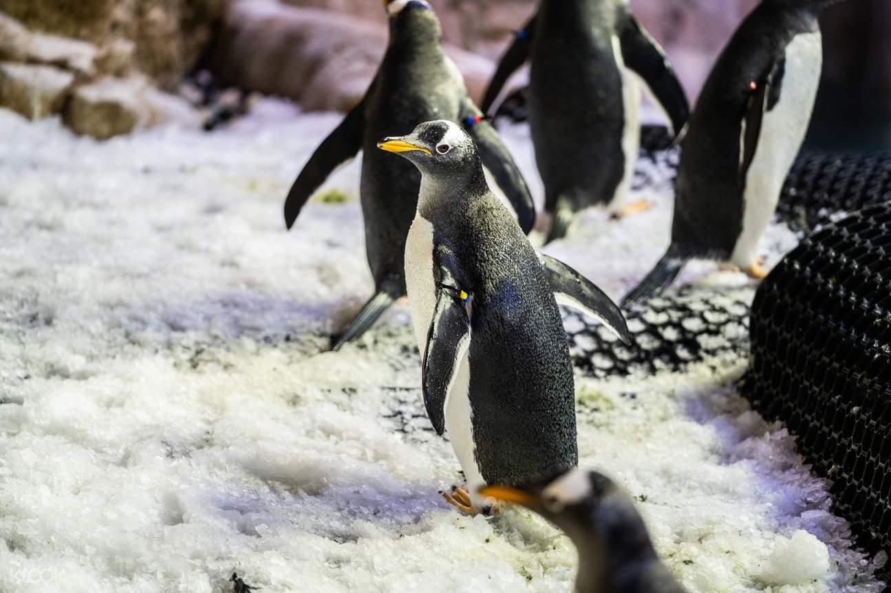 Have fun at Penguin Cove