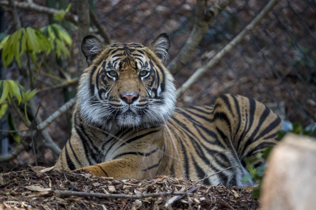 San Diego Zoo Safari Park admission