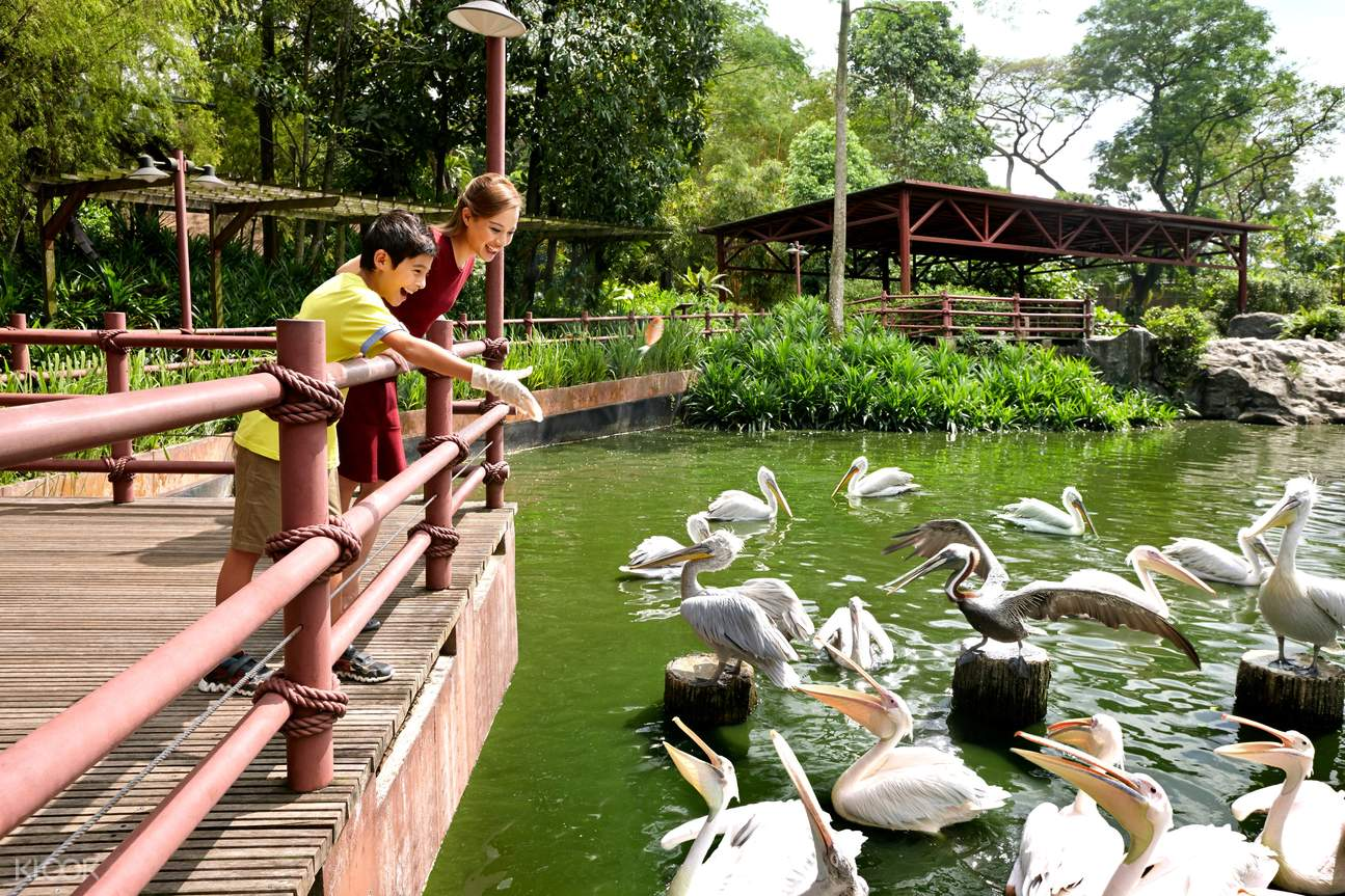Explore Pelican Cove at Jurong Bird Park and be greeted with spectacular sights such as brown pelicans diving into the water to catch fish!