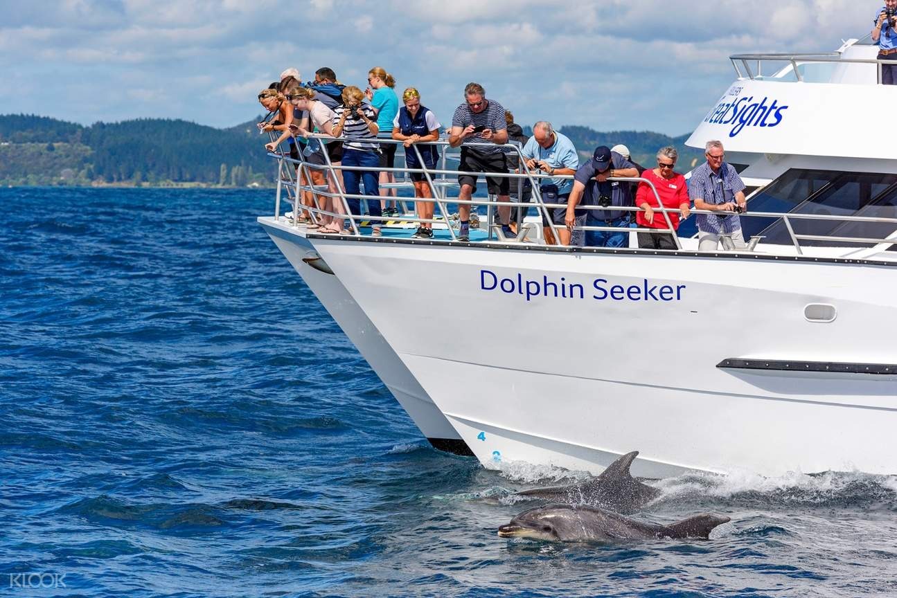People watch the dolphins