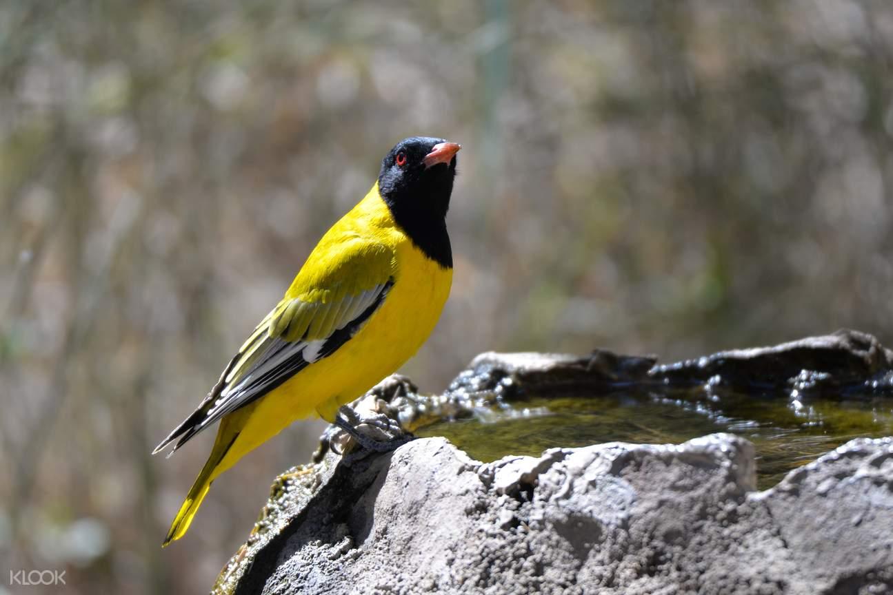 India bird watching, Goa bird watching tour, bird watching trip