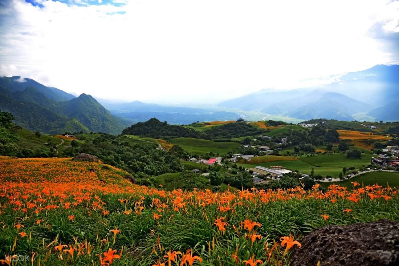 花蓮六十石山金針花季一日遊