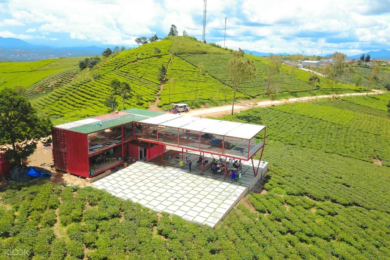 cau dat tea plantation da lat