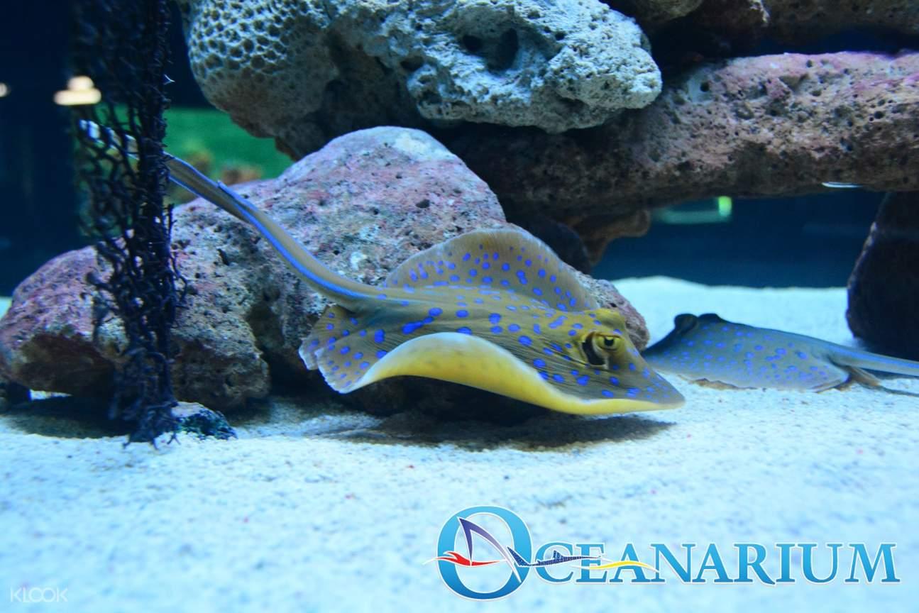 马尼拉海洋公园 海洋馆