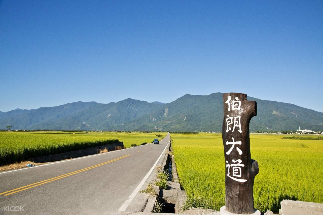台東花東縱谷景點一日遊:伯朗大道 & 天堂路 & 鹿野高台
