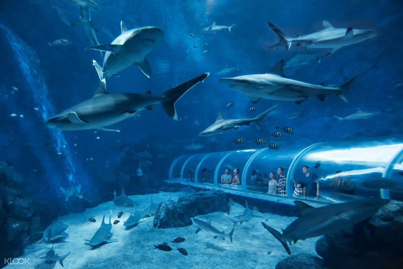 SEA Shark Sea