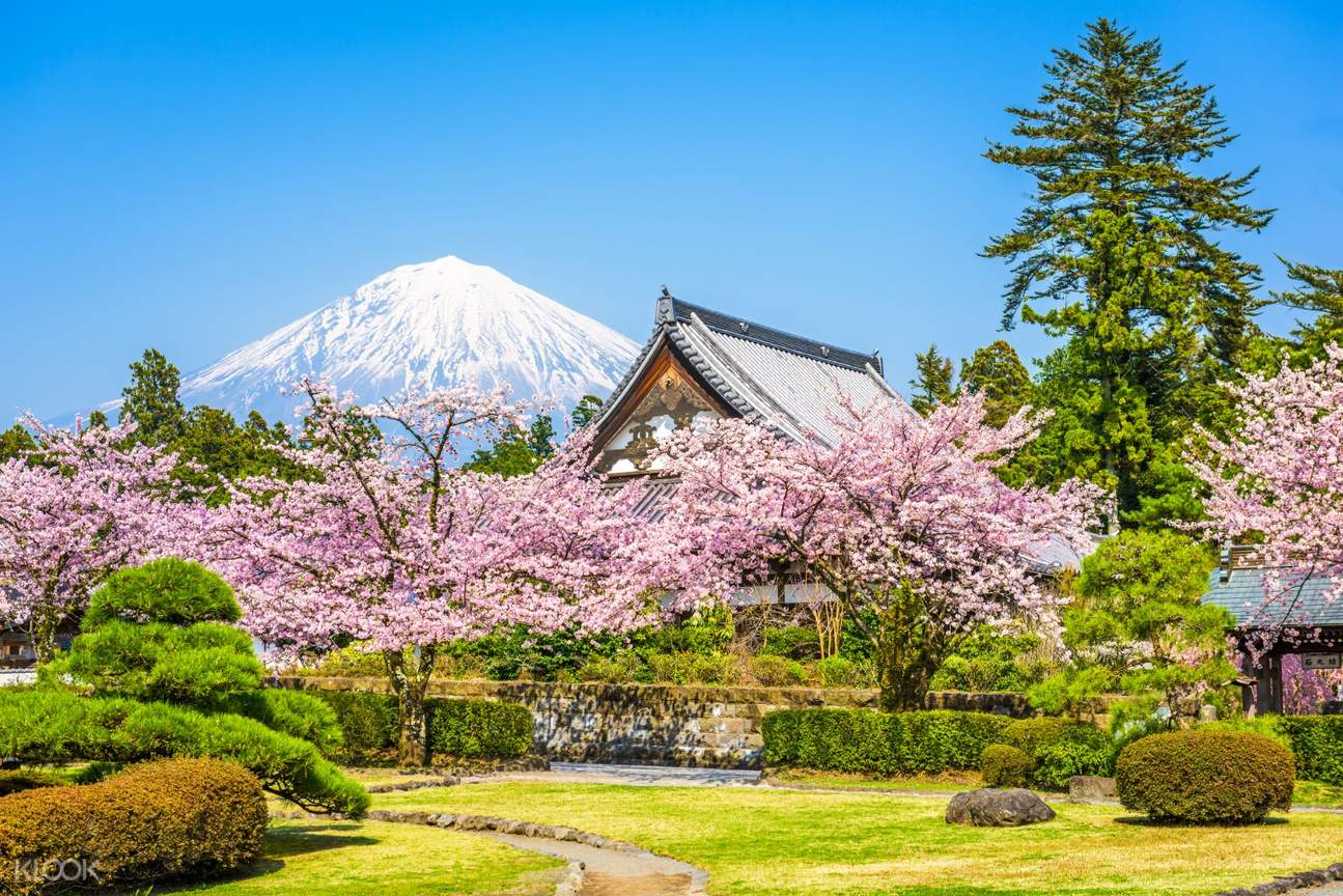 view of mt fuji in the middle of cherry blossoms