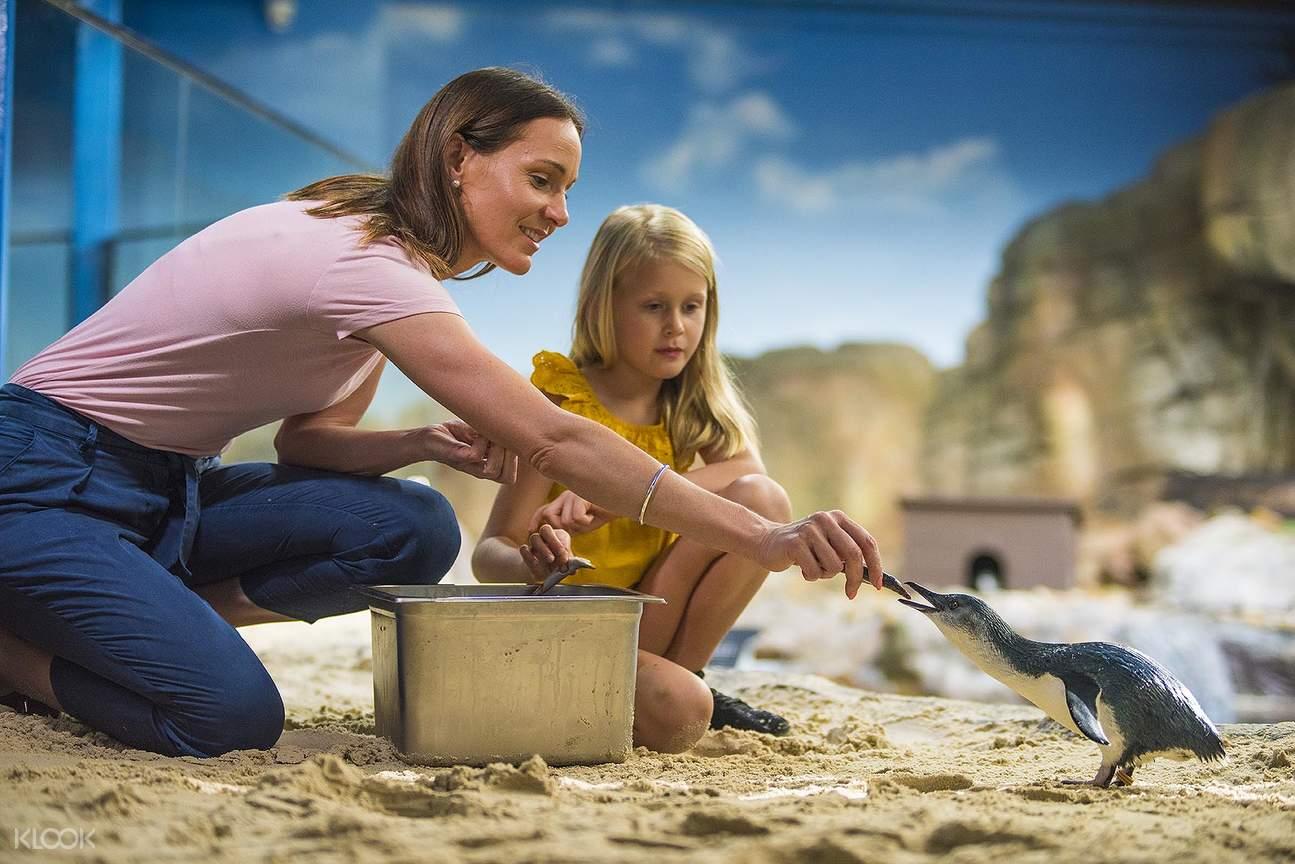 Penguin feeding family fun SEA LIFE Sunshine Coast