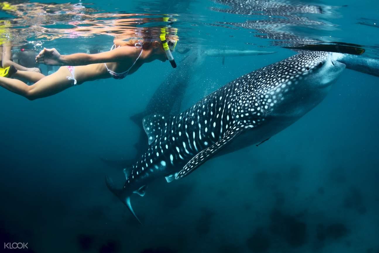 Oslob snorkeling