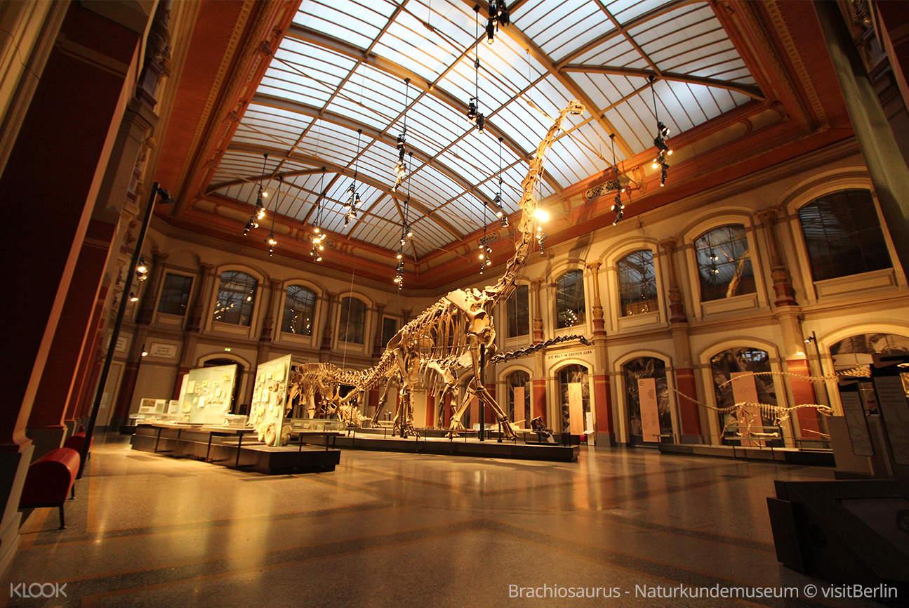 Brachiosaurus - Naturkundemuseum © visitBerlin