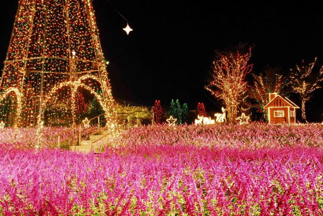 冬季螃蟹吃到飽& 足利花卉公園彩燈秀& 草莓採摘巴士一日遊