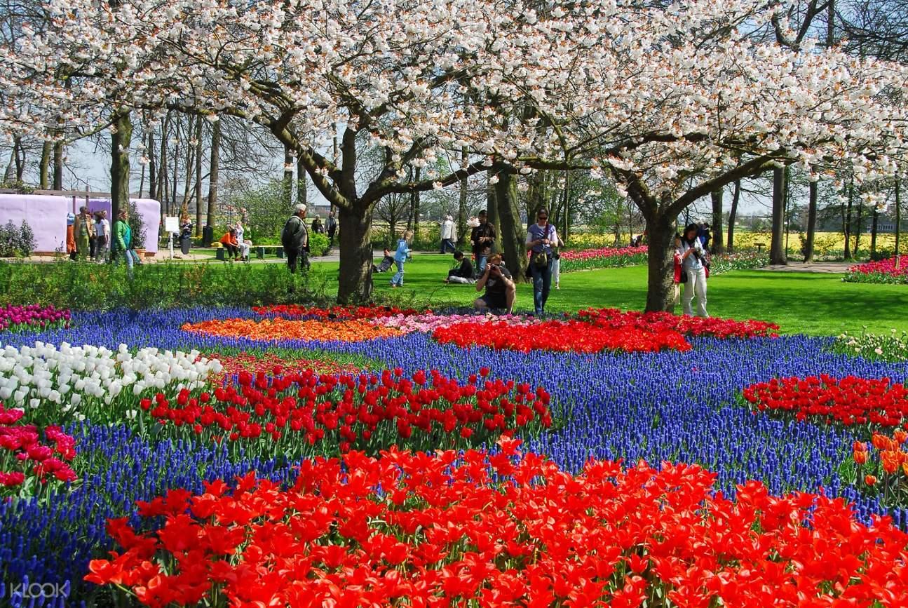 荷蘭庫肯霍夫花園