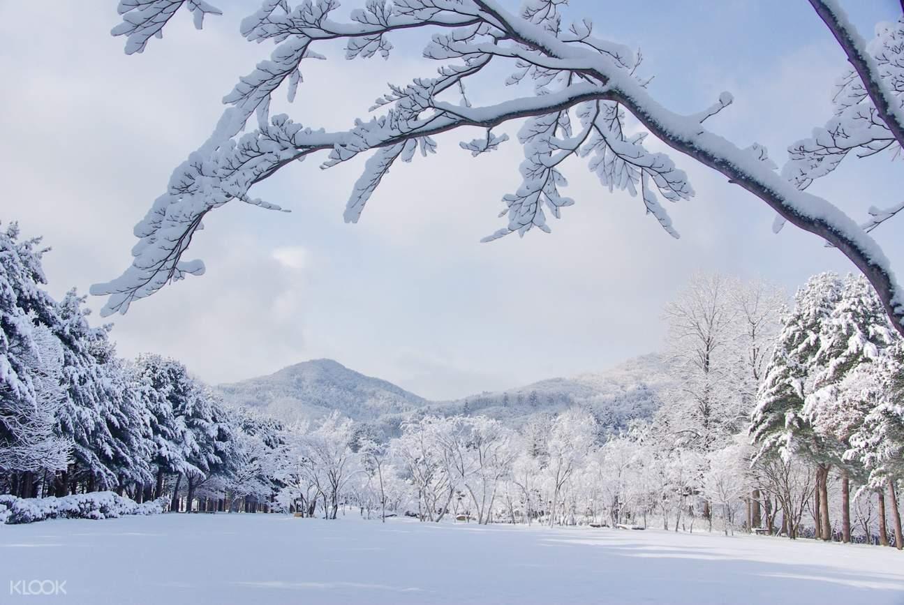 nami island in winter