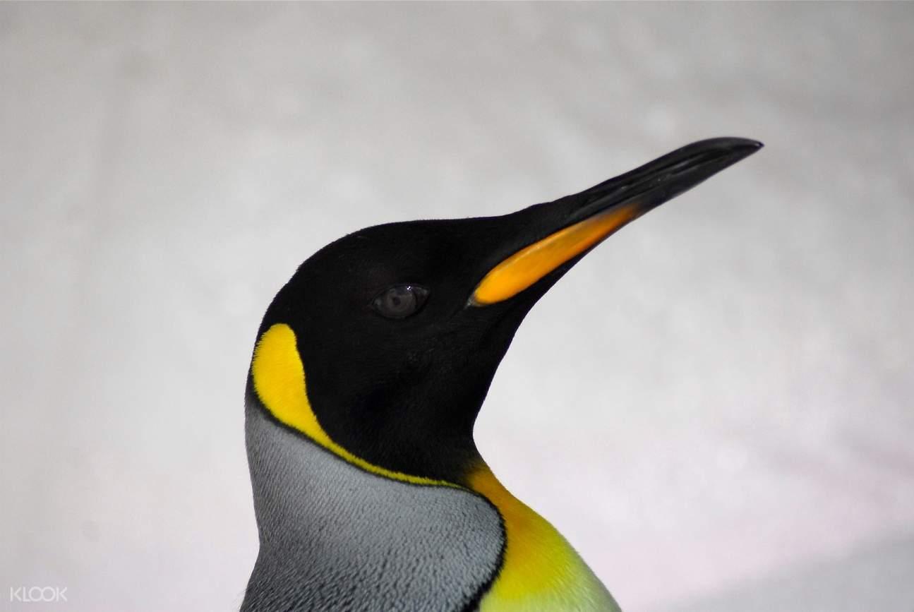 悉尼海洋生物水族館企鵝觀看體驗