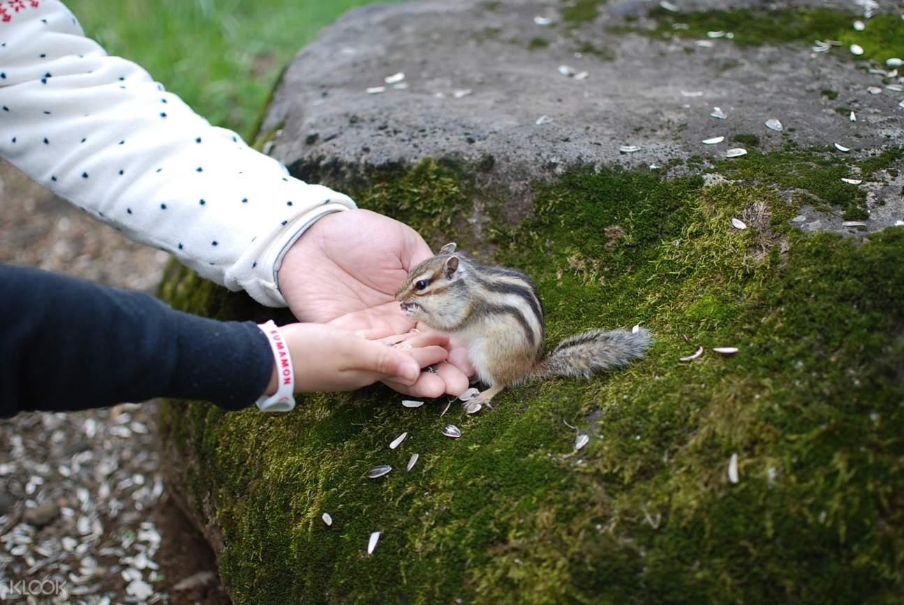 hands holding chipmunk