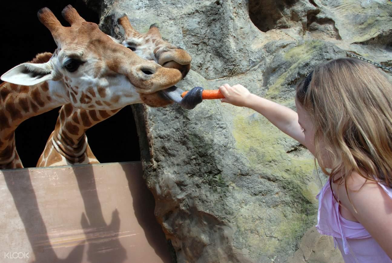 Taronga Zoo Roar and Snore Camp