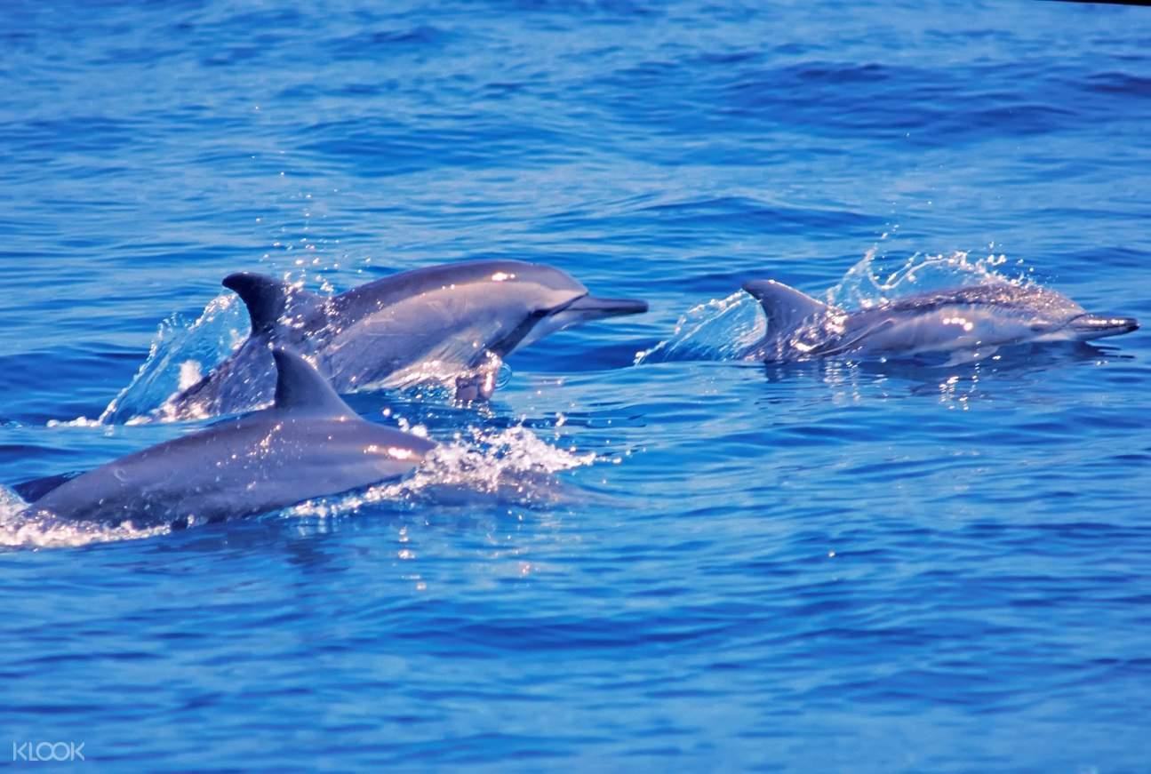 成群的鯨豚