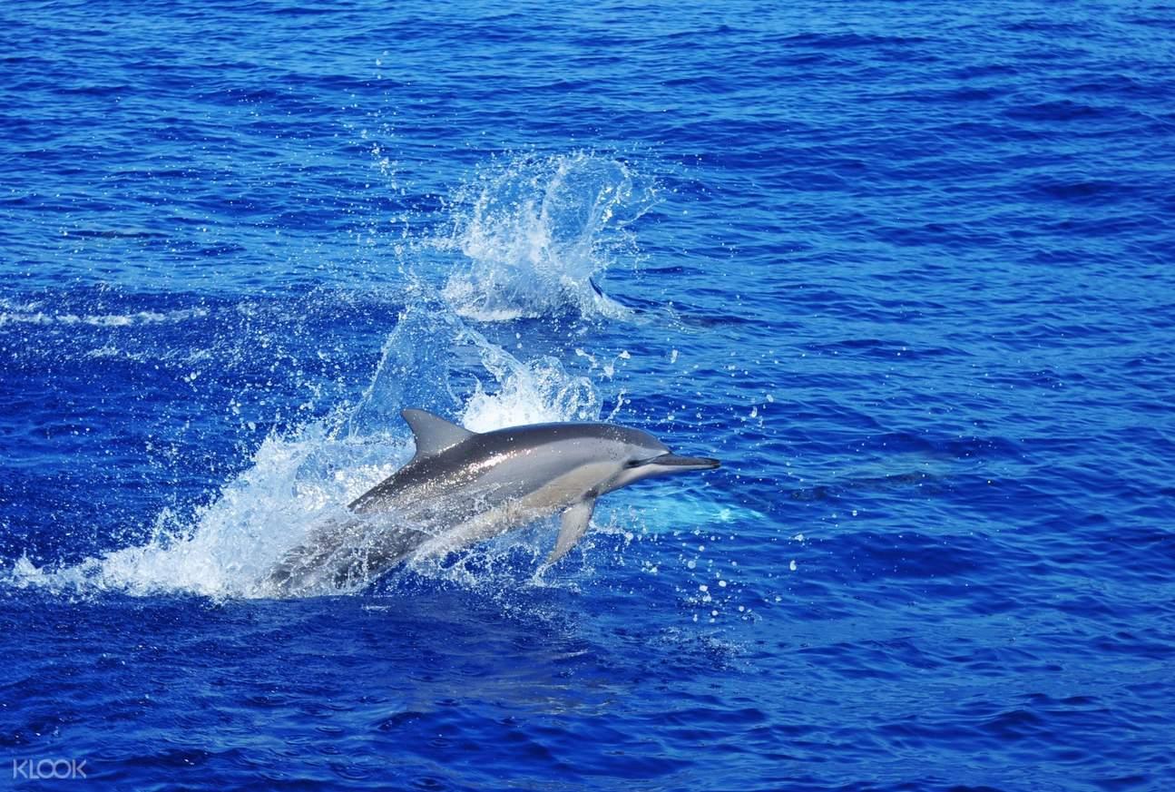 毛里求斯海豚湾,毛里求斯一日游,毛里求斯旅游,毛里求斯著名景点,