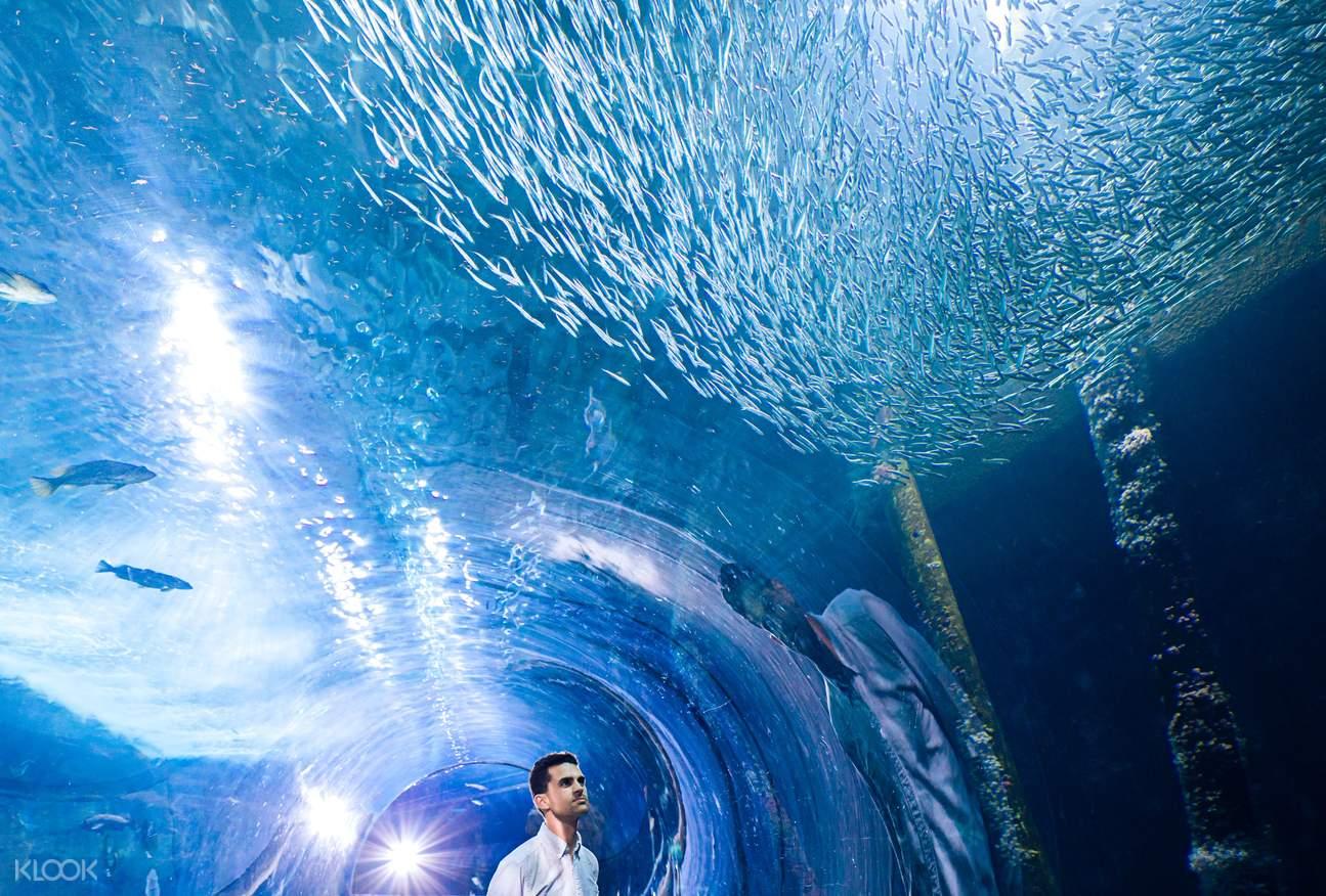 aquarium of the bay ticket