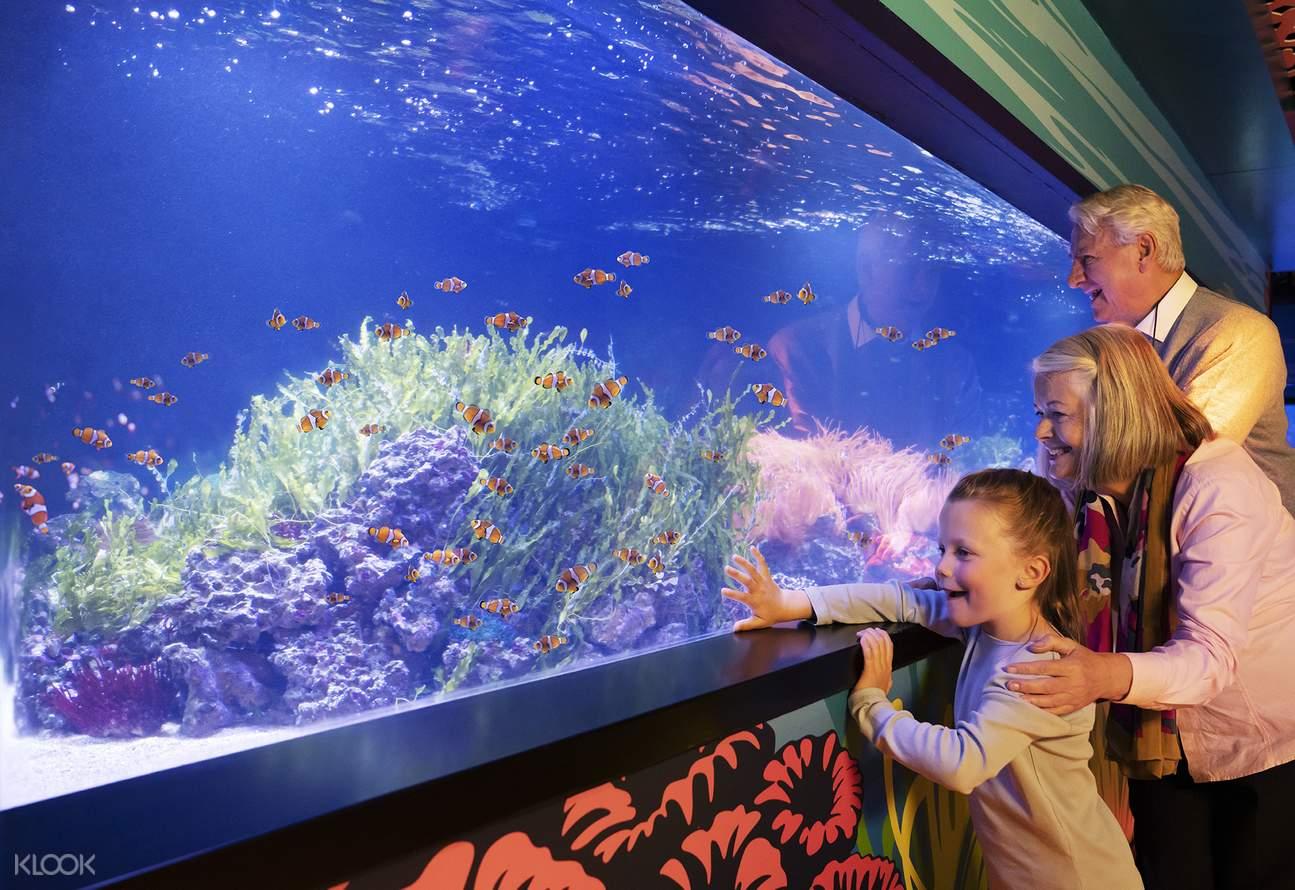 sea life london aquarium ticket