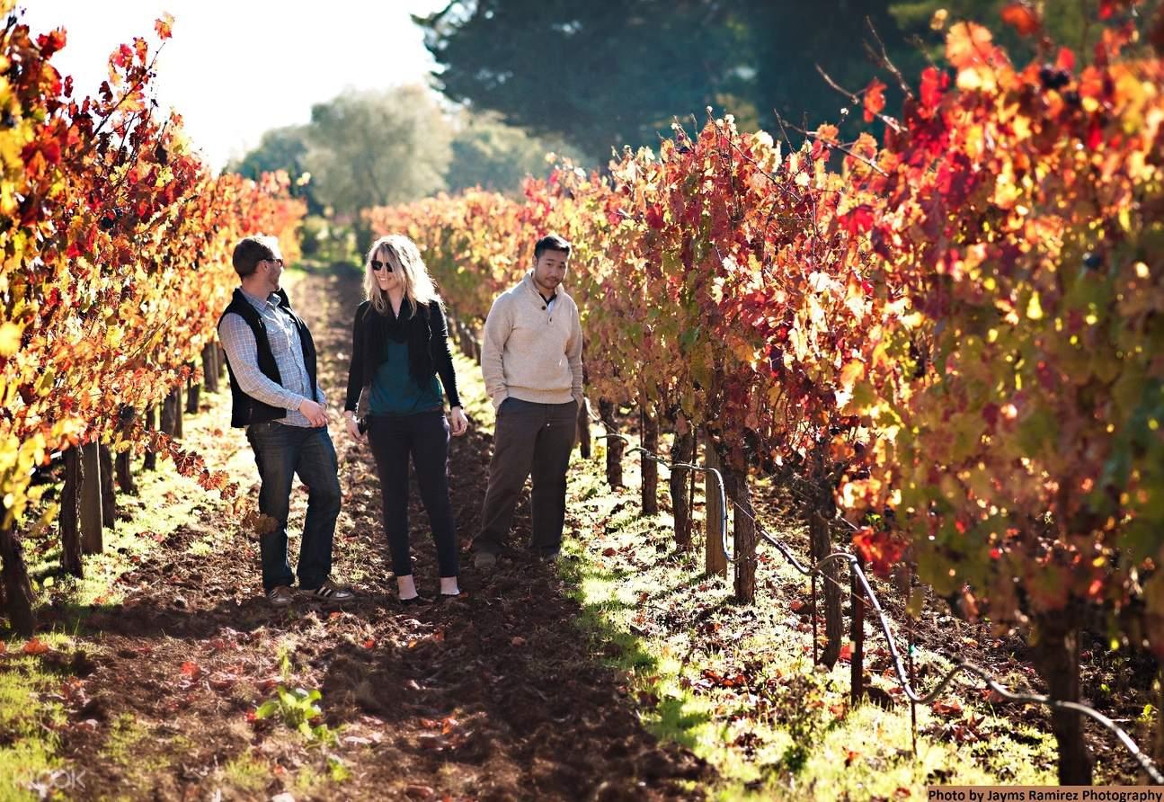 納帕索諾瑪葡萄酒鄉一日遊