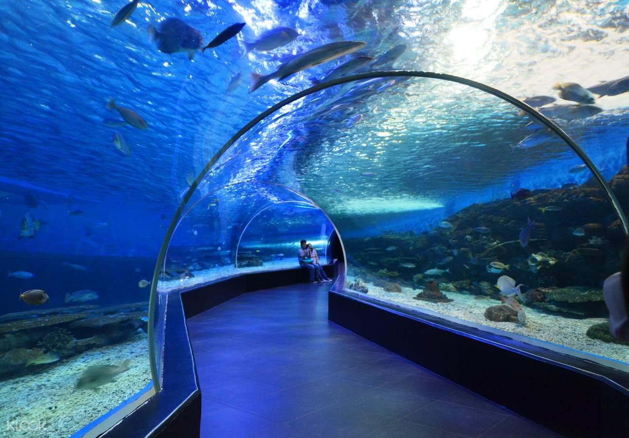 长滩岛潜水,长滩岛水族馆潜水,长滩岛水族馆,长滩岛水上运动