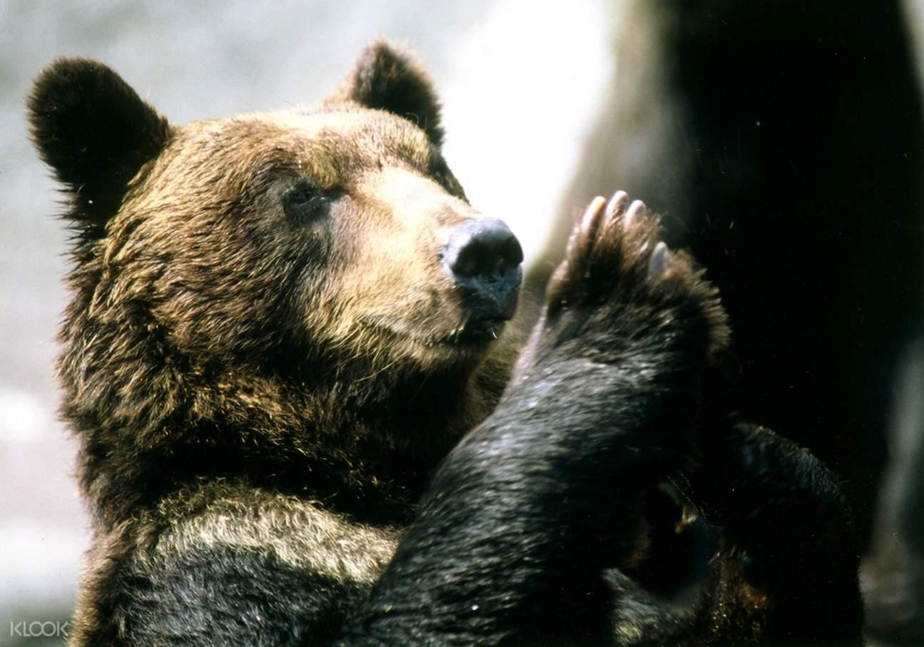 Bear in Noboribetsu Bear Park