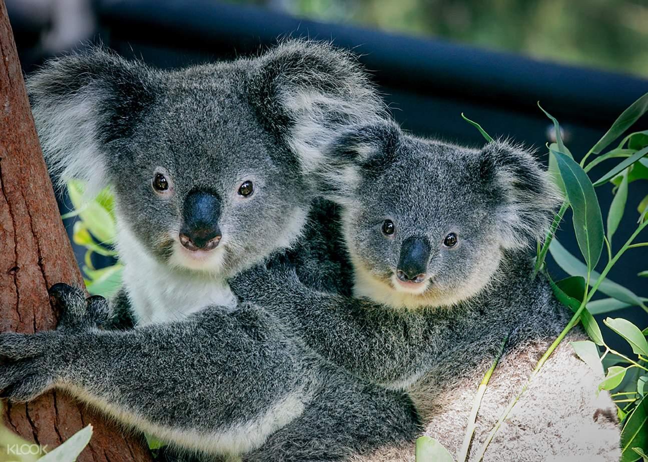 taronga zoo sydney hop on hop off cruise