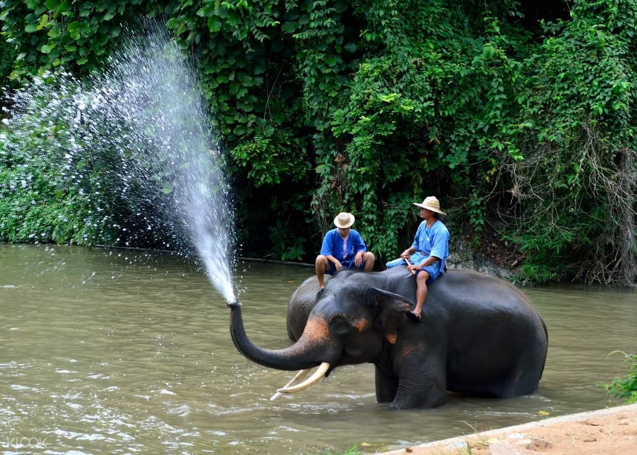 泰國大象保護中心
