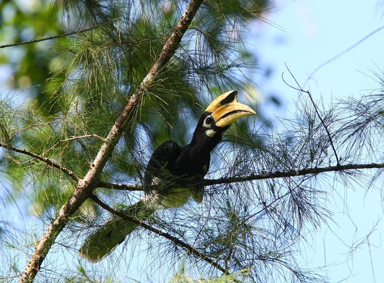Langkawi Bird Watching