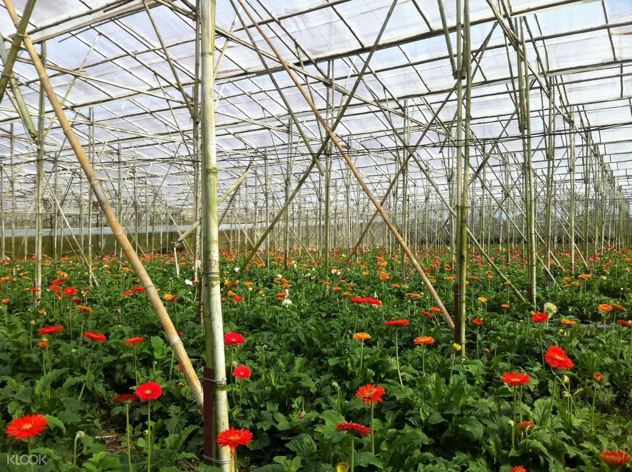越南林同大叻花卉村