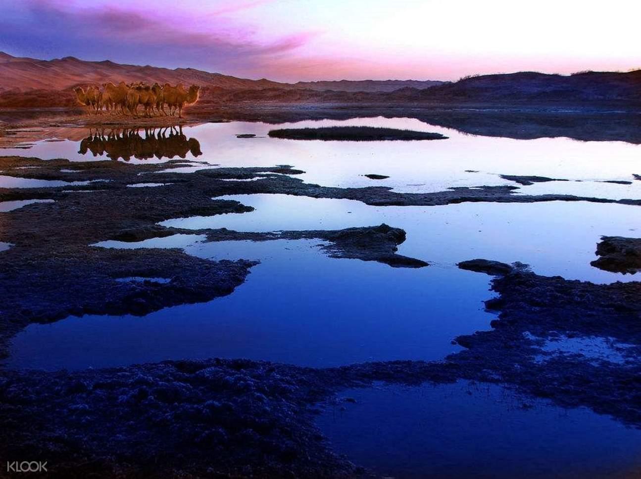 腾格里天鹅湖