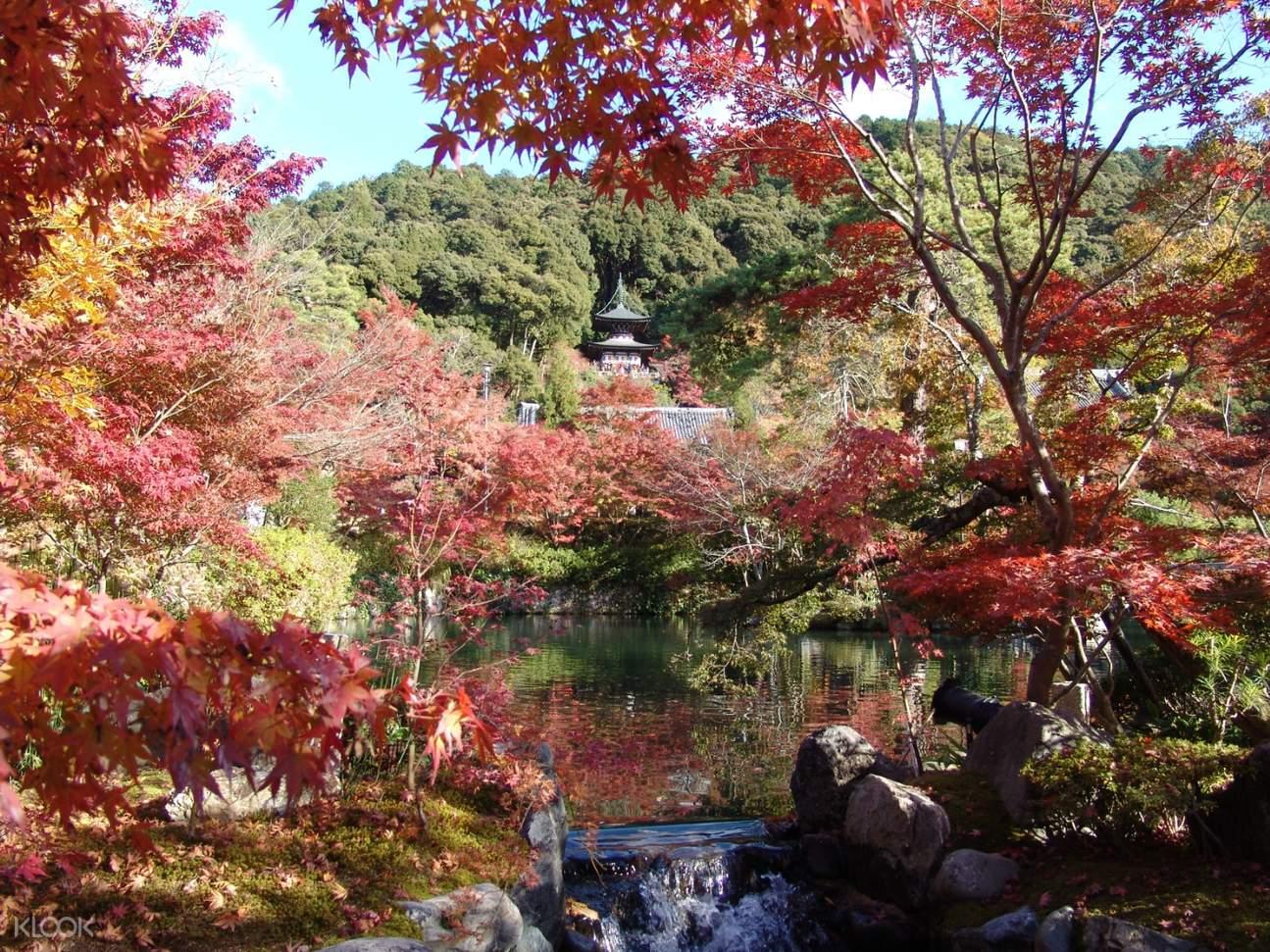 Higashiyama Autumn Leaf Walking Tour