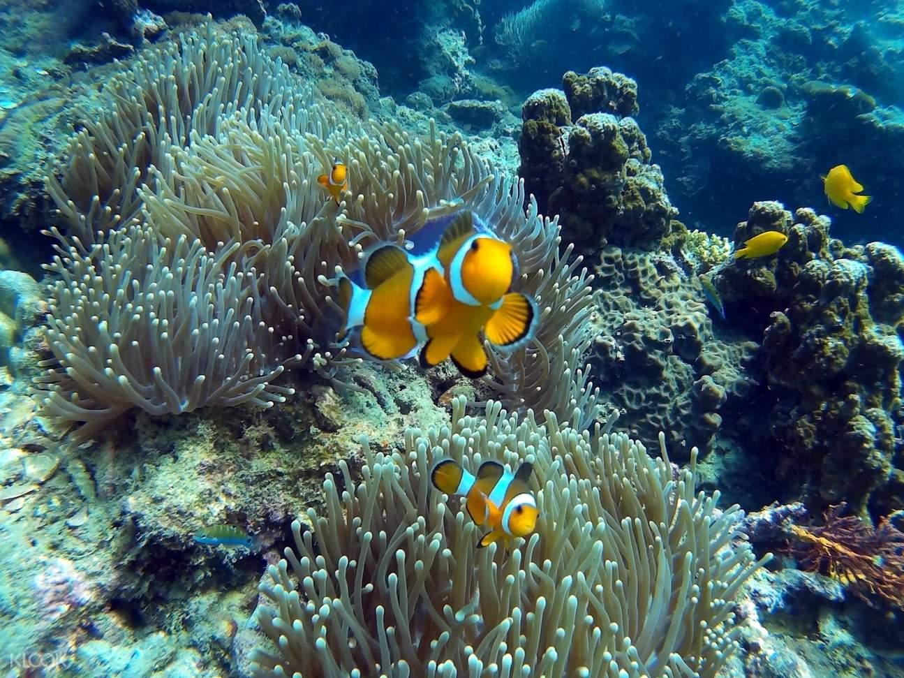 皮皮島黑鰭礁鯊浮潛半日遊