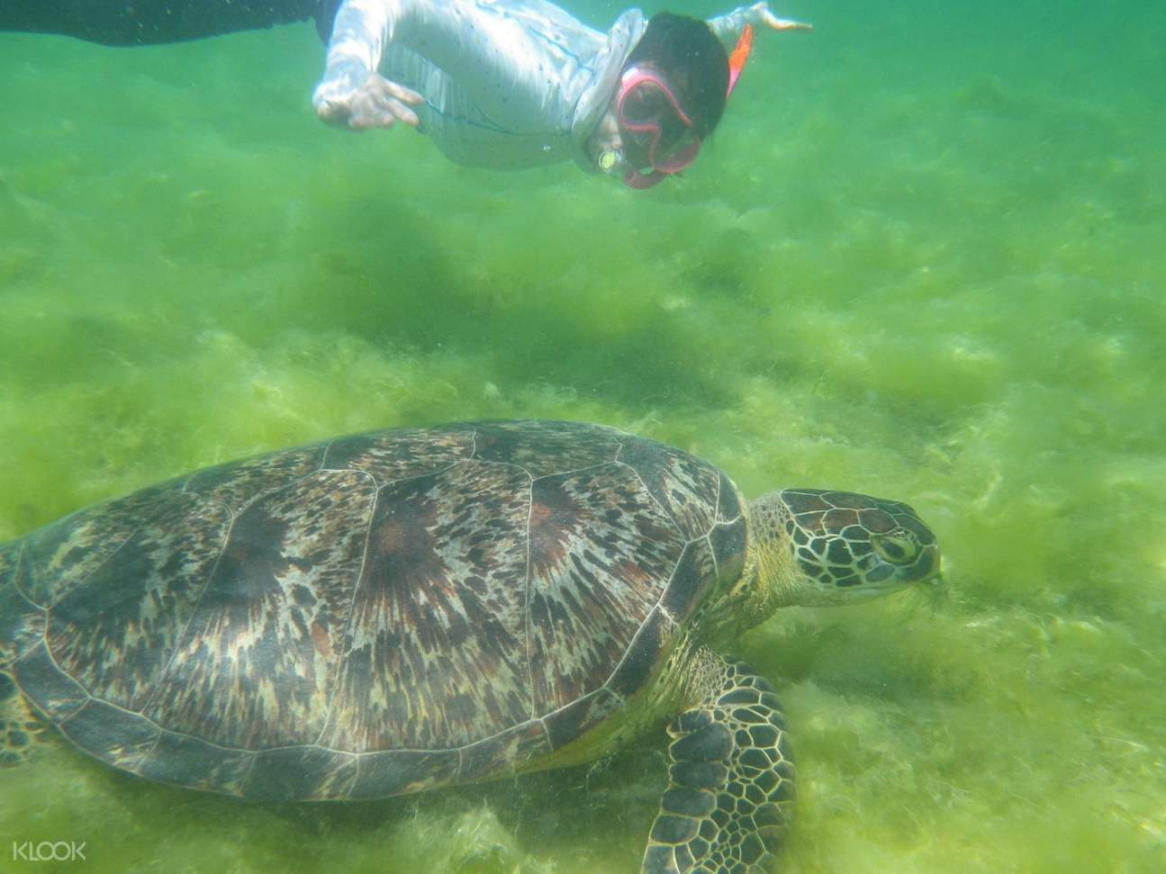 Sea Turtle at Pescador Island Snorkeling Join In Day Tour from Cebu