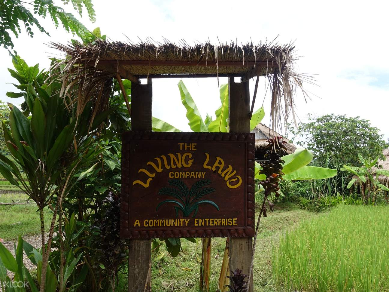 Living Land Company Rice Experience