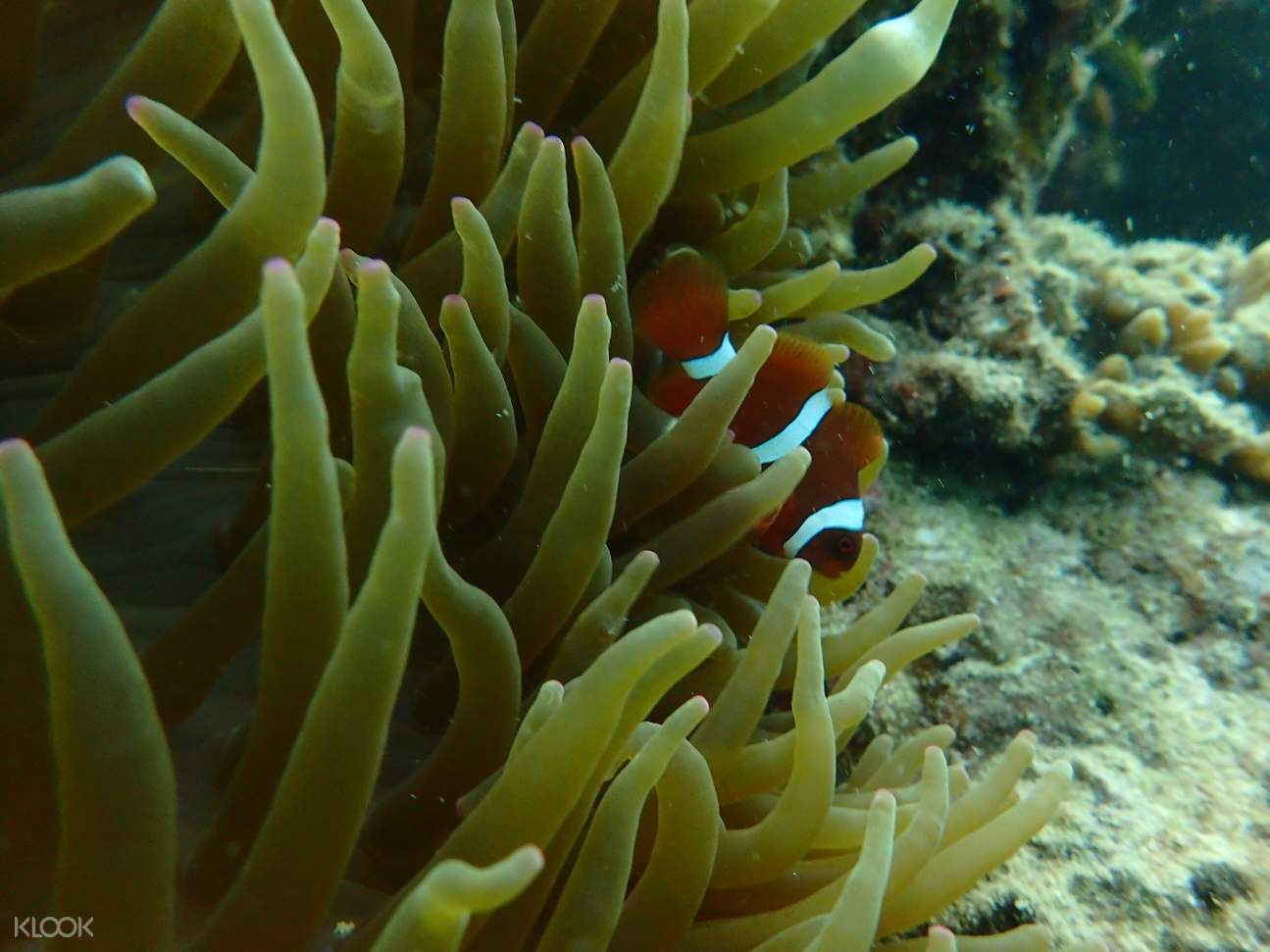 fish in gaya island