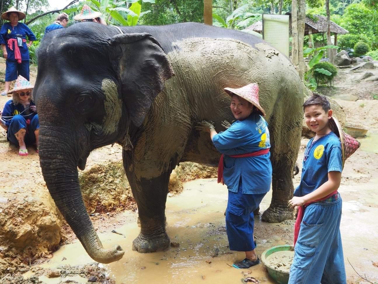 elephant care experience phuket
