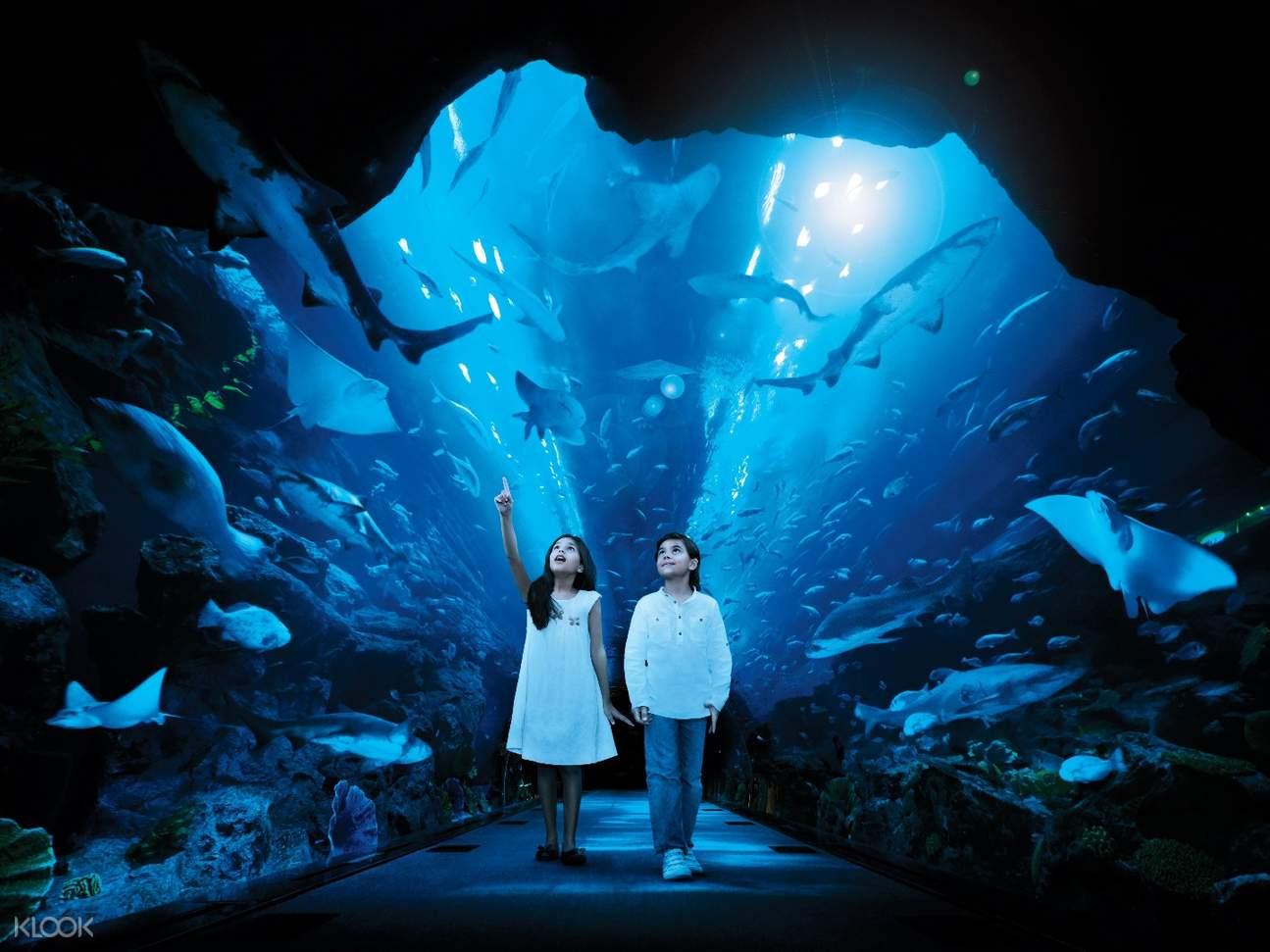 迪拜水族馆 & 水下动物园(基础体验项目)