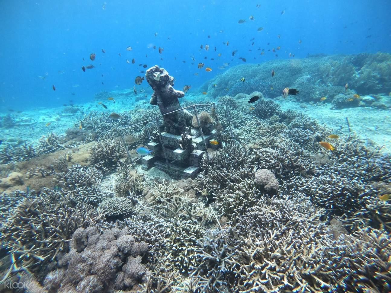 藍夢島浮潛