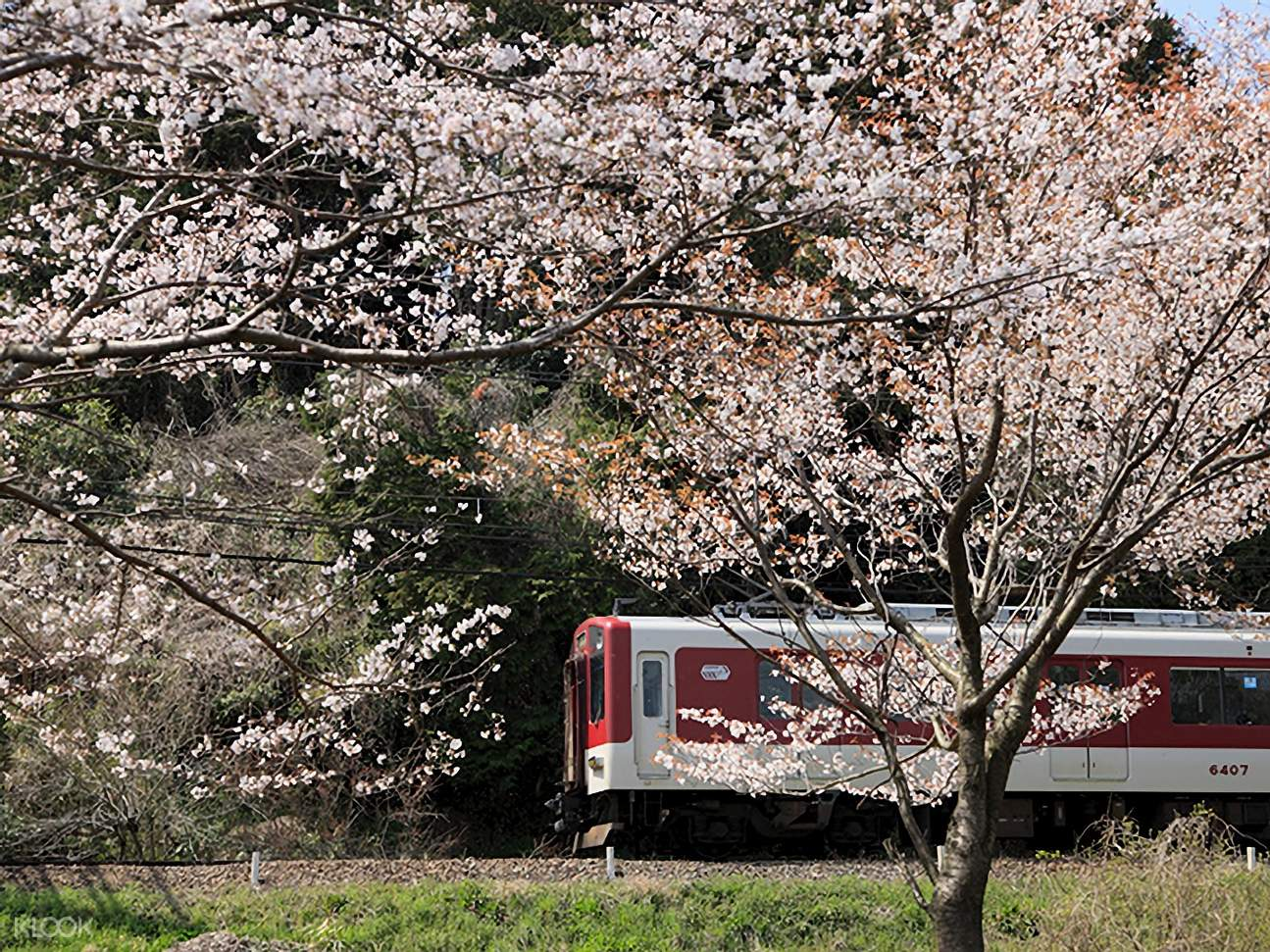Kintetsu Railway with view of cherry blossoms