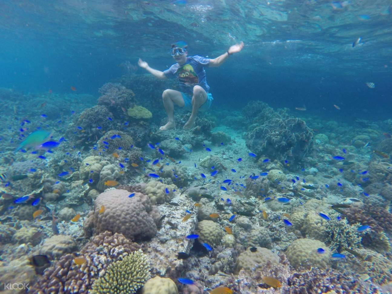 Corals at Pescador Island Snorkeling Join In Day Tour from Cebu