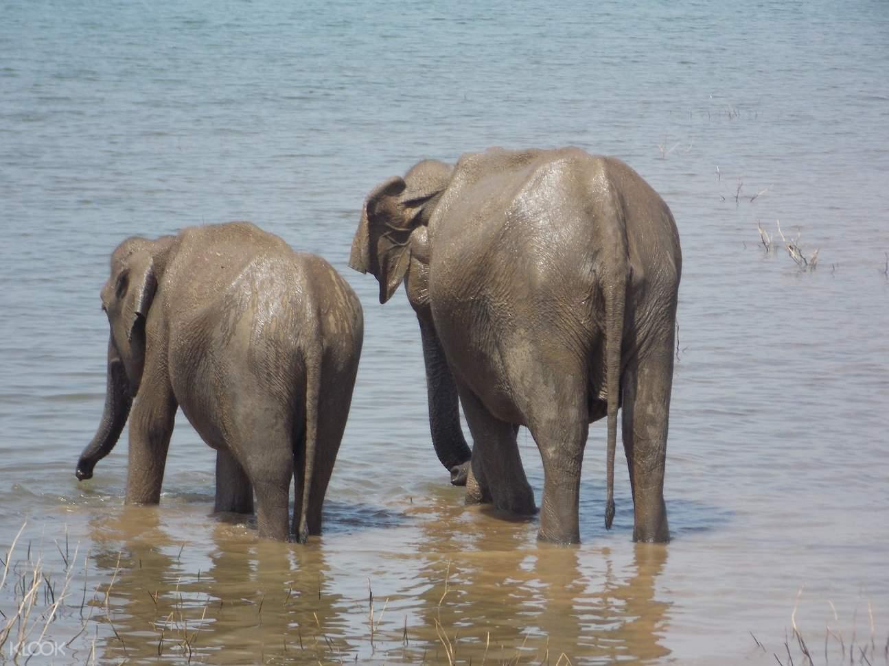 斯里蘭卡 烏達瓦拉維國家公園狩獵之旅Udawalawe