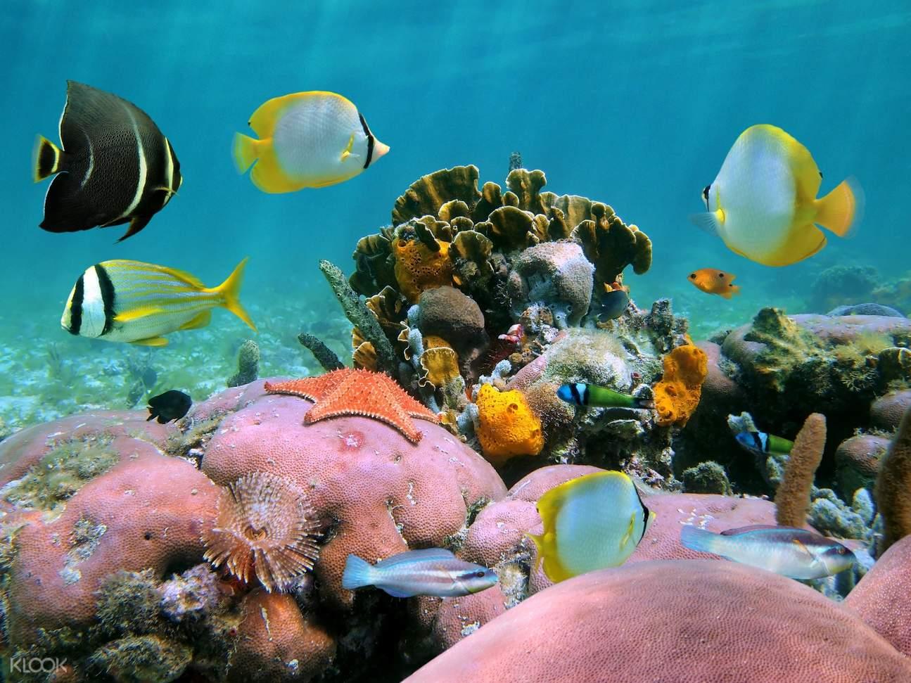 濤島深潛體驗(蘇梅島出發)
