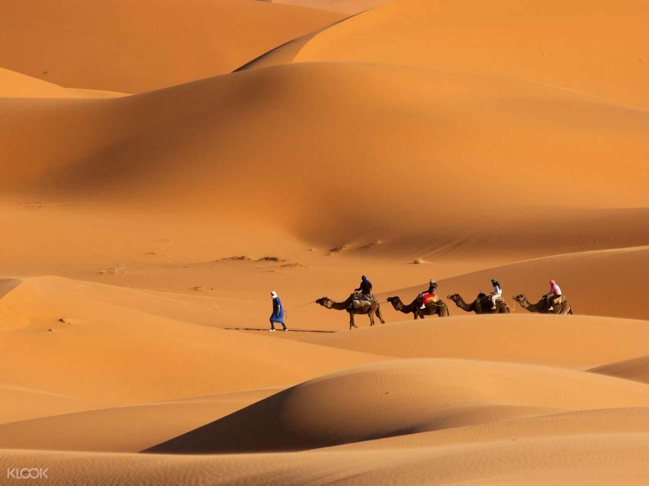 杜拜沙丘駱駝騎行