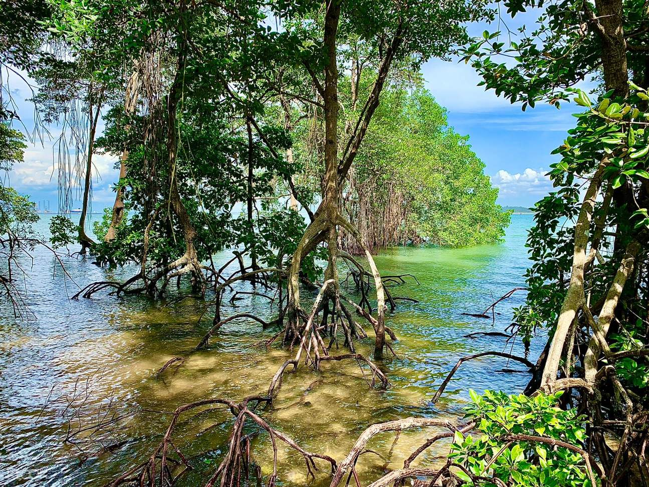 Learn about Chek Jawa's six ecosystems and the diverse array of wildlife that inhabit these unique habitats