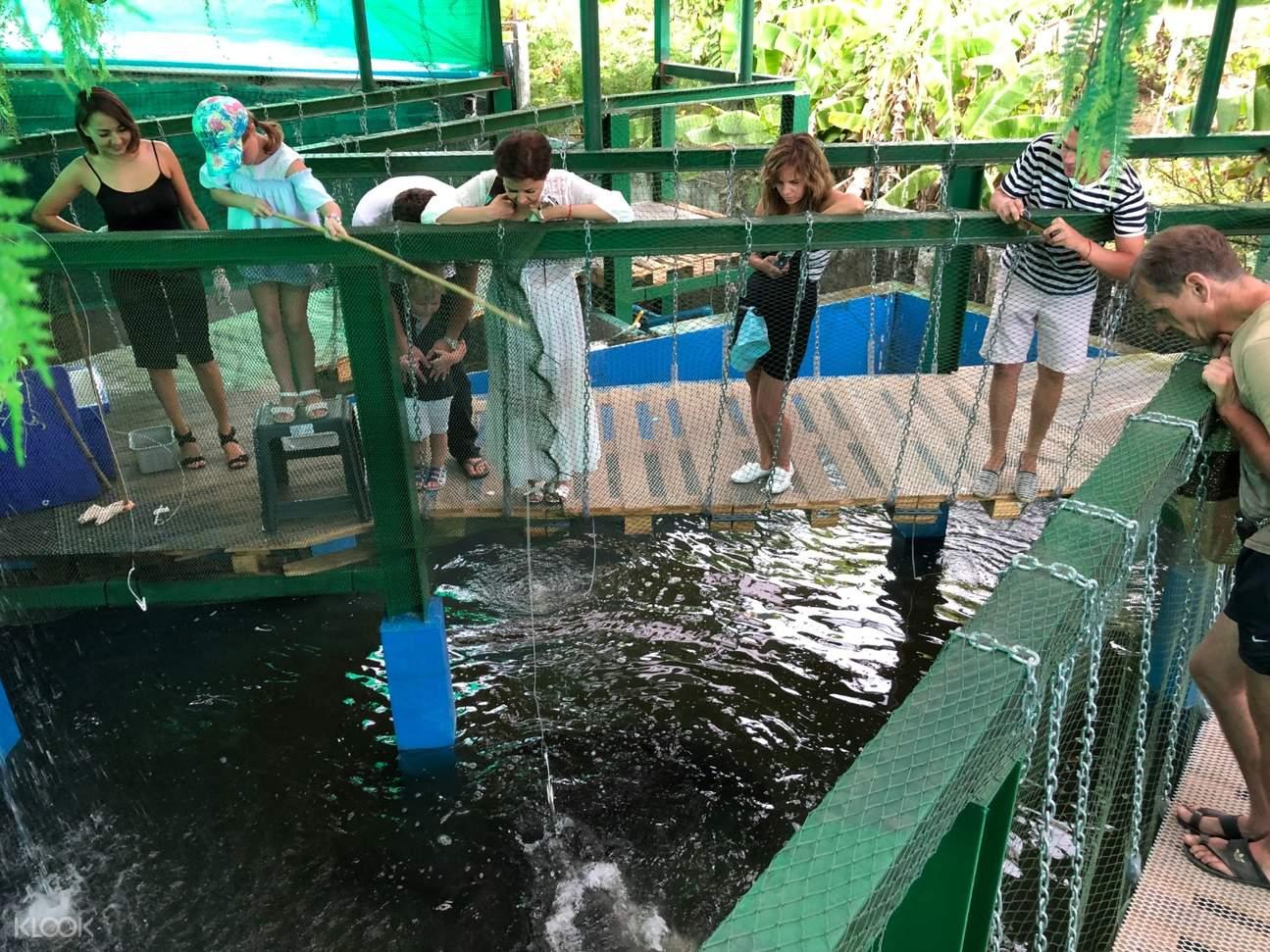 people looking at a crocodile pond