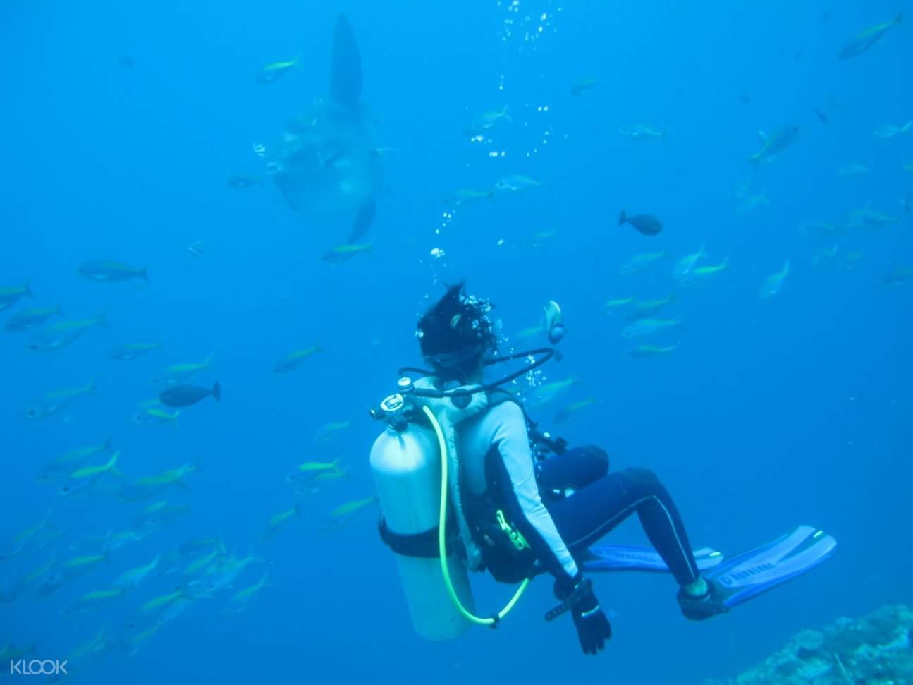 珀尼達島魚群,珀尼達島水肺潛水,珀尼達島水肺潛水體驗,珀尼達島潛水